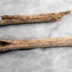 old bones found in Albir